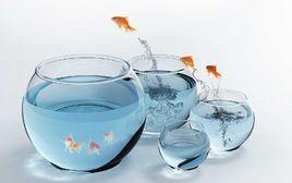 EMBA企业管理:金鱼缸效应